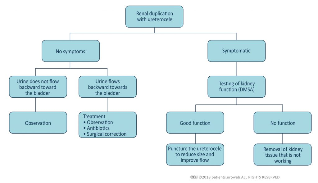 Fig. 4: Treatment decision making for congenital malformations in the urinary tract.