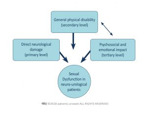 Fig. 3: Different levels at which neurourological diseases affect sexual function.